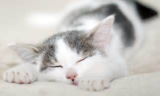 sleeping cat picture picture 6