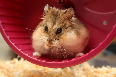 hamster videos picture 1