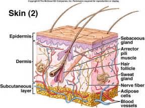 calcium in axillary lymph node and autoimmune disease picture 7