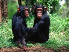 monkey online picture 10