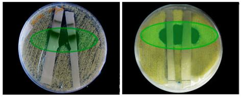 combretum micranthum acid reflux picture 2