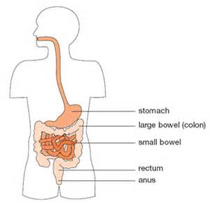 what is ment by bowels and mercy in picture 5