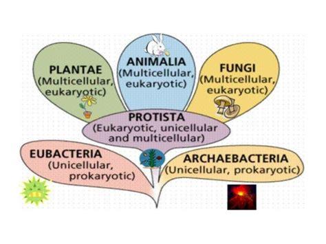 fungi classification picture 10