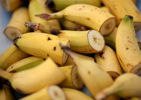banana fungus is it harmfull to humans picture 5