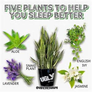 does sleeping with plants cut off your oxygen picture 1