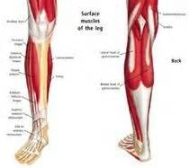lower leg muscle pain picture 2