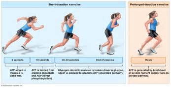 muscle fatigue picture 11