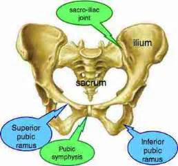 pain above left hip bone and sacro iliac joint picture 9