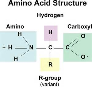 amino acids and looking younger picture 5