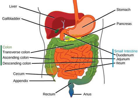 feline liver function picture 5