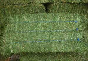 3 string alfalfa bales for wholesale in texas picture 2