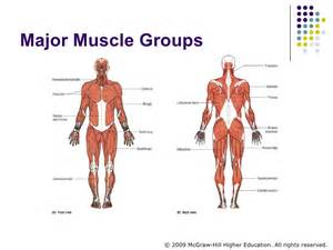 fast twitch and slow muscle fibers picture 11