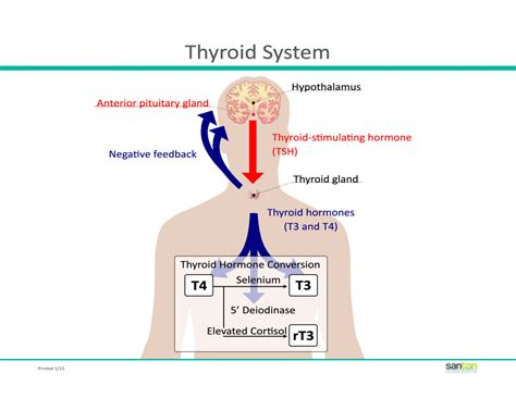 what does does thyroid medicine come picture 3