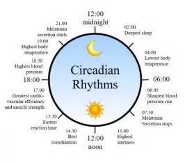 circadian sleep rhythm picture 10
