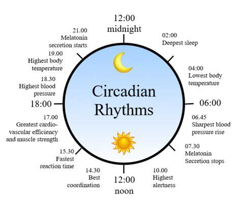 circadian sleep rhythm picture 3