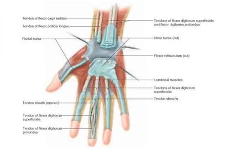 bursitis in many joints picture 3