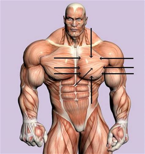 synthol injection penis picture 13
