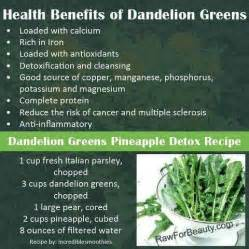 dandelion for health picture 7