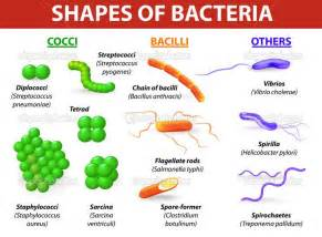 shape of bacterial dna picture 1
