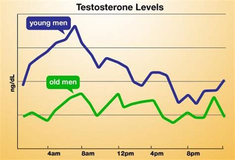 testosterone serum levels in females picture 10