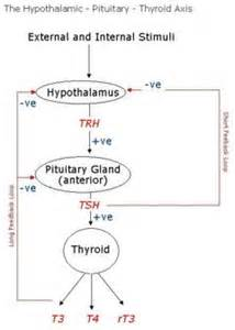 hypothyroid liver picture 5