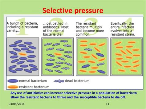 antimicrobial definition picture 6