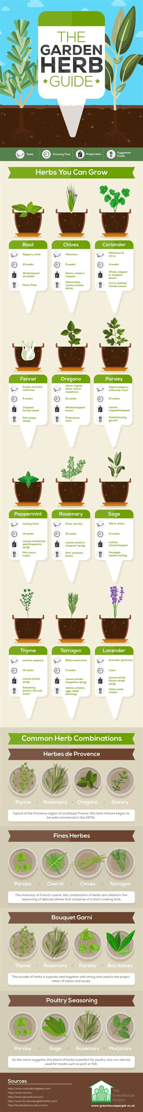 what herbs that can be used as abortion picture 5