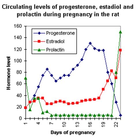 testosterone hormone during pregnancy picture 1