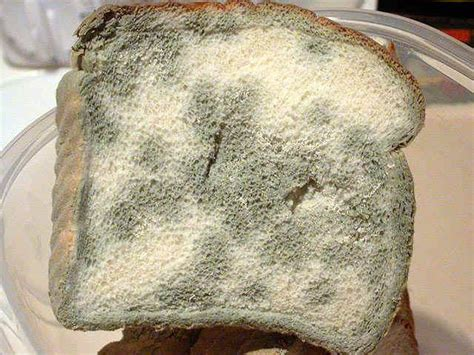 fungus on bread picture 9