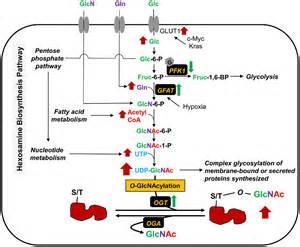 synotrex phosoplex exomine picture 6