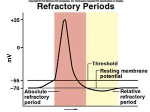 best supplement for refractory period picture 10