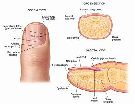 stop fingernails growing picture 15