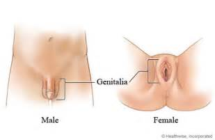 young males with low testosterone picture 14