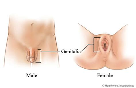 women relieving a male penis picture 6
