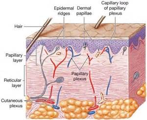 definition for keratin picture 13