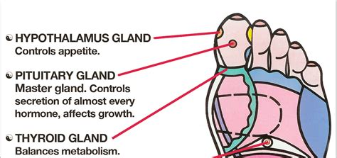 fat burning pressure point picture 10