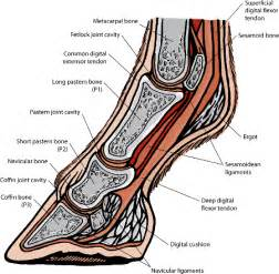 muscle bone and joint center picture 17