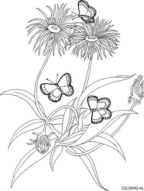 dandelion coloring picture 6