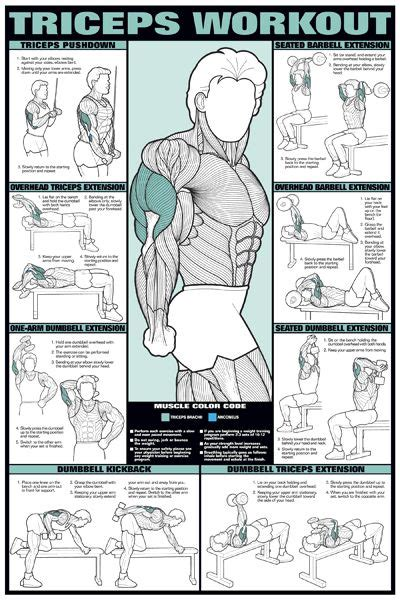 exercise muscle tone and weight loss picture 5