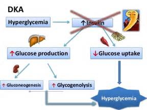 growth hormone decreases glucose uptake picture 3