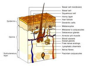 skin cancer invades a nerve picture 1