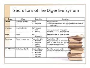digestive fluids picture 2