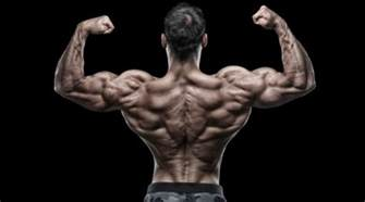 back muscle picture 6