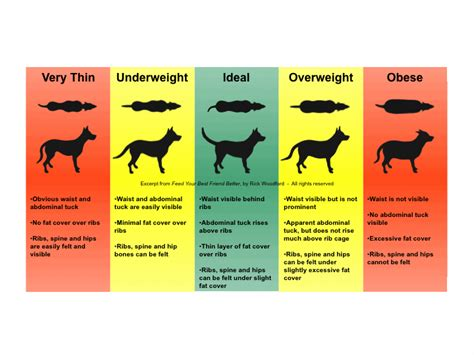 products to help dog gain weight picture 2