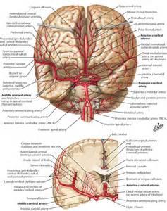 dysarthria le cerbvas disease picture 2