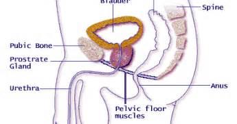 weak bladder muscles in men picture 13