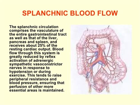 blood reverse flow picture 1