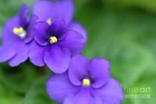 violet picture 7