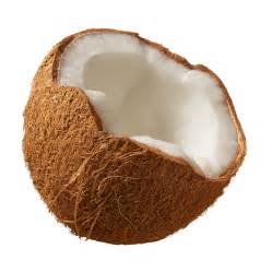 coconut picture 6