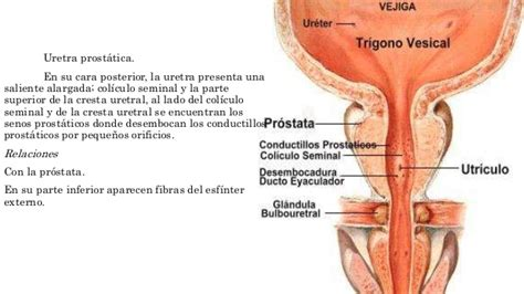 prostate mage therapy demonstration picture 6